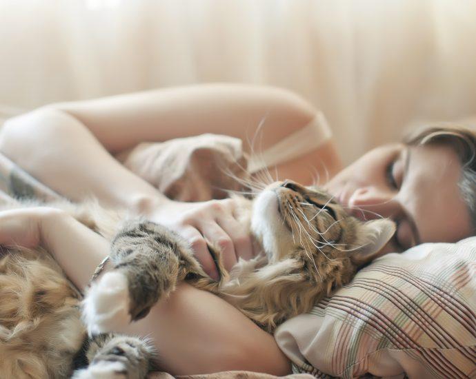 Tiere im Bett